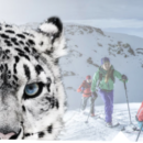 Snow Leopard Day in St. Antönien